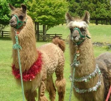 All I Want for Christmas is a Llama | Shroud of the Avatar Forum